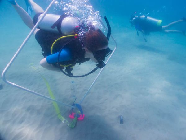 PADI Peak Performance Buoyancy Carriacou Grenada